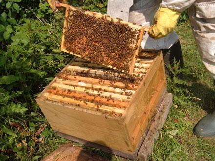 PNA 2017-2019, intanire intre ministru si apicultori