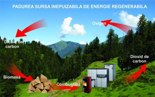 biomasa, sursa de energie regenerabila