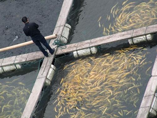 investitii in acvacultura
