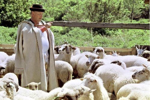 protestul crescatorilor de animale