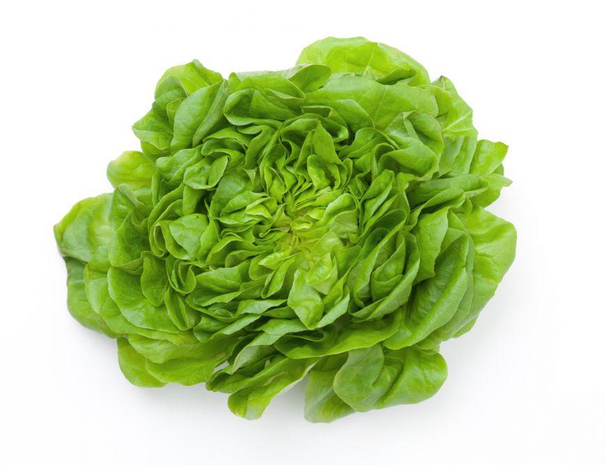Bolile salatei verzi