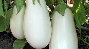 vinete-albe-seminis